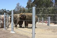 Cable Fence for the Elephants at San Diego Zoo